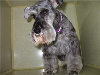 Barrie Poodle Salon - Pet Grooming, Clipping & Washing - 705-726-4744