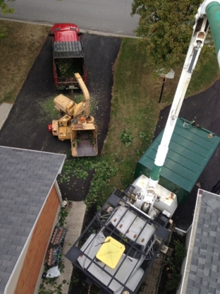 Tree Service in Shannonville ON | YellowPages ca™