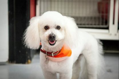 Pauline's Pet Grooming - Pet Grooming, Clipping & Washing - 250-493-1040