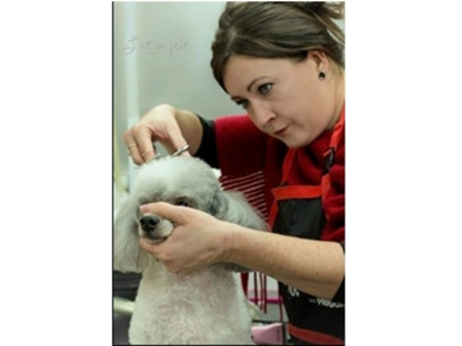 Toilettage BKT - Pet Grooming, Clipping & Washing