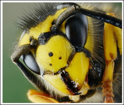 Affordable Pest Control & Bee Removal - Pest Control Services - 416-505-4641