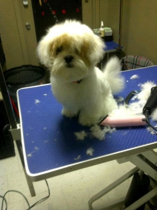 Tangles 2 Tame Dog Grooming - Toilettage et tonte d'animaux domestiques - 519-594-2443
