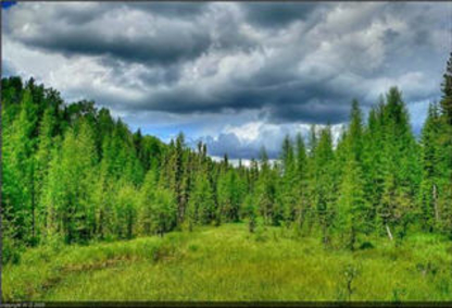 Econ Consulting - Forestry Consultants