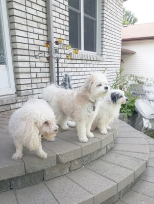 Galloping Groomer and Pet Sitting Mobile Service - Toilettage et tonte d'animaux domestiques - 416-940-0081