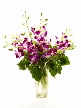Brant Florist - Florists & Flower Shops - 905-639-7001