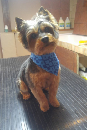 Garderie Hapitou - Pet Grooming, Clipping & Washing - 819-679-1077
