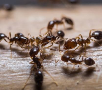 Elite Pest Control Ltd - Pest Control Services - 403-461-5584