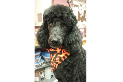 Roxy & Friends Grooming - Pet Grooming, Clipping & Washing - 289-478-6034