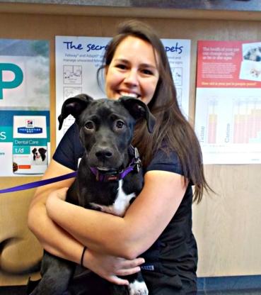 Lockerby Animal Hospital - Veterinarians - 705-522-4555