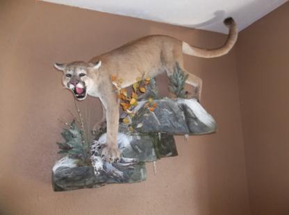 Eugene's Wildlife Taxidermy - Taxidermists