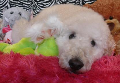 Ruff N Stuff Dog Grooming - Pet Grooming, Clipping & Washing