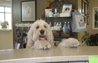 The Paw Resort & Wellness Centre - Pet Grooming, Clipping & Washing - 204-729-9943