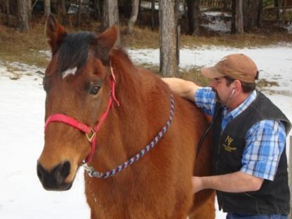 Accord Veterinary Services - Vétérinaires - 250-314-6566