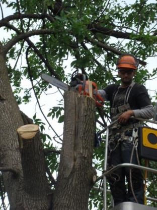 P.L. Experts Tree Service - Tree Service