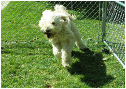 Canine Campus Dog Daycare and School Ltd. - Pet Sitting Service