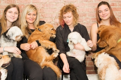 Tail Waggers - Pet Grooming, Clipping & Washing - 416-760-9244