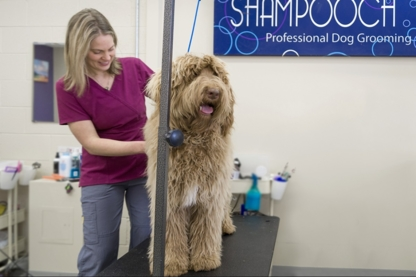 Shampooch Grooming - Toilettage et tonte d'animaux domestiques - 403-726-0485