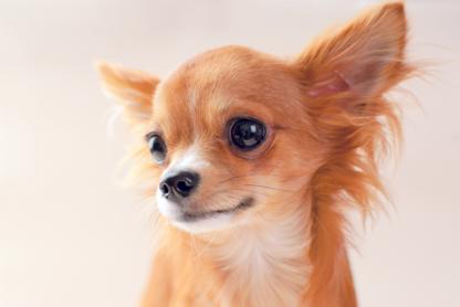 Wilmot Veterinary Clinic - Vétérinaires - 519-696-3102