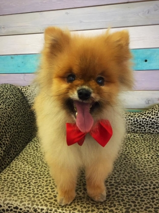 Miss Bones' Pet Parlour - Veterinarians - 780-572-3647