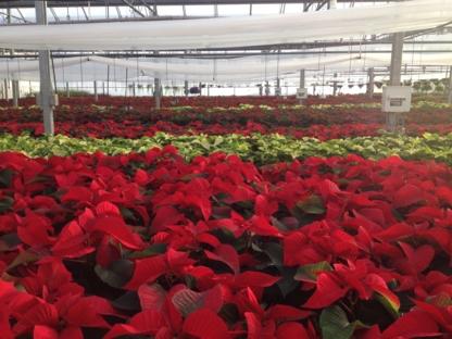 Bonnie Doon Flowers Ltd - Centres du jardin - 780-440-3053