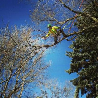 Second Nature Tree Care - Service d'entretien d'arbres - 403-915-3986