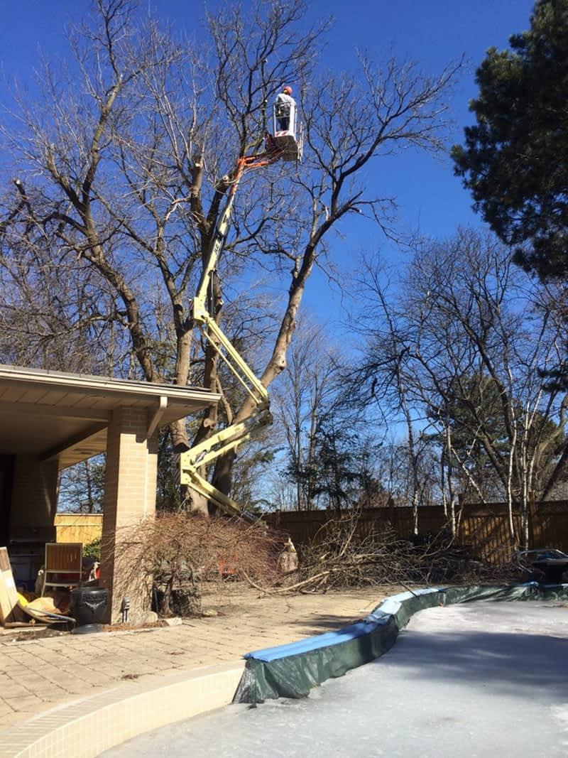 photo Enviro Tree Care Inc