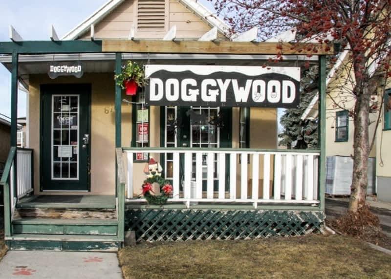 photo Doggywood