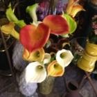 The Orchid - Fleuristes et magasins de fleurs - 709-639-3003