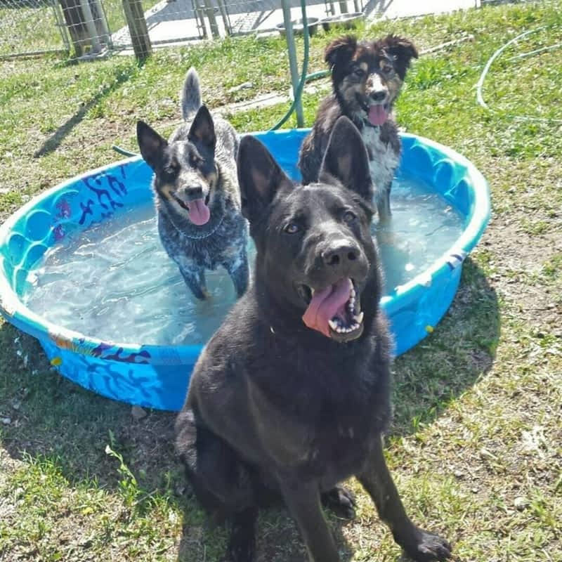 Dog Kennel Services Victoria Bc