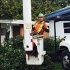 Johnny 5's Tree Services - Tree Service