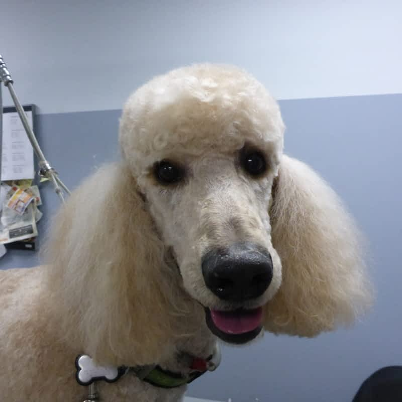 Dog Grooming Supplies Vancouver