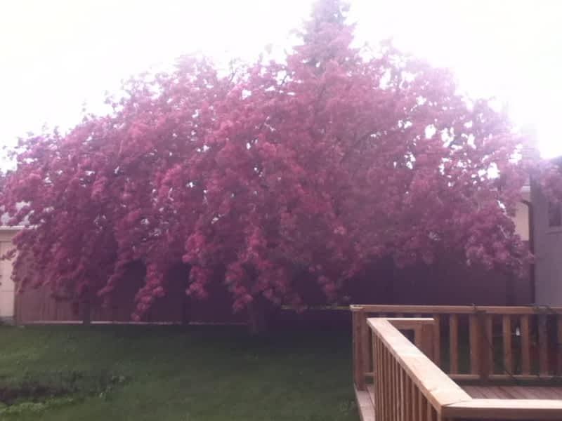 photo Aspen Tree Service