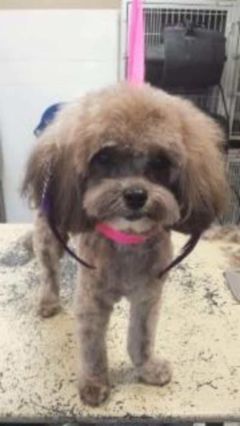 Mimi S Dog Grooming
