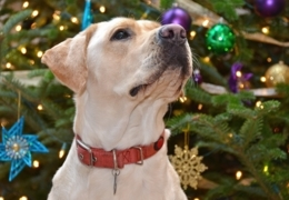 Vancouver pet shops for puppy-approved presents