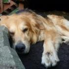 Bonez & Katnip Pet Services - Garderie d'animaux de compagnie - 289-834-3694