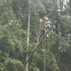 View Ashton Timber Tree Service's Victoria profile