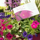 Fern Forest Gardens - Garden Centres - 705-689-8230