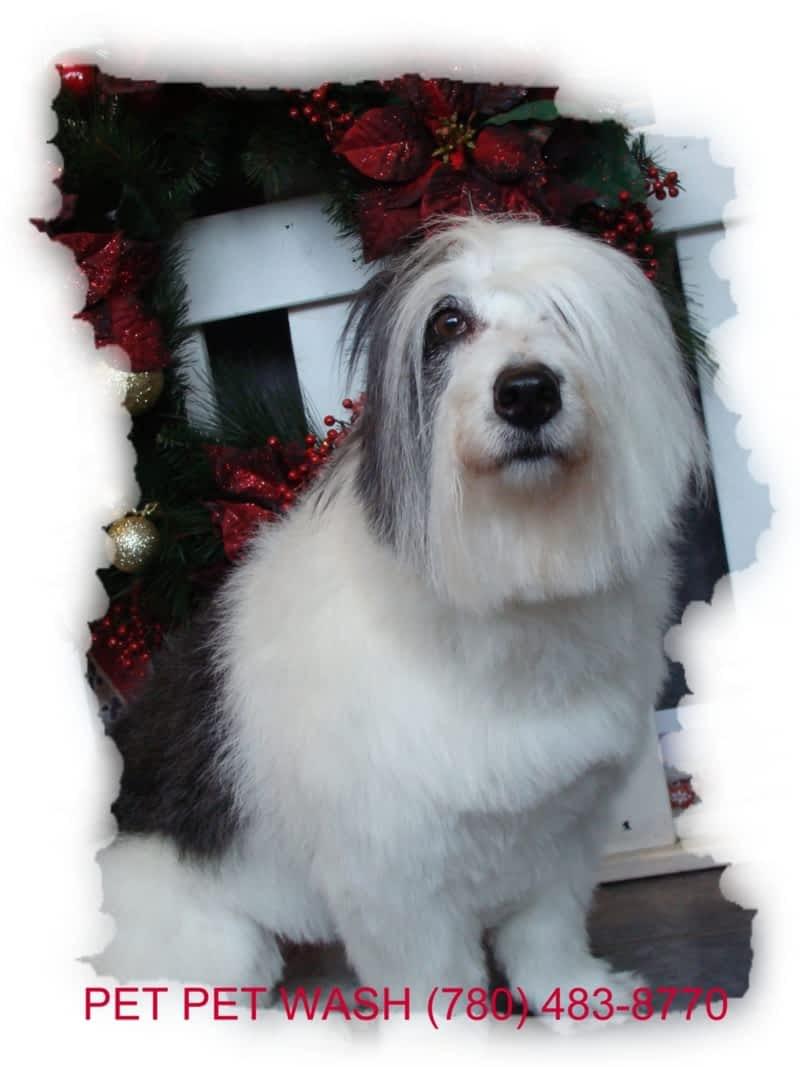 Pet Pet Wash Professional Dog Grooming Ltd Edmonton Ab