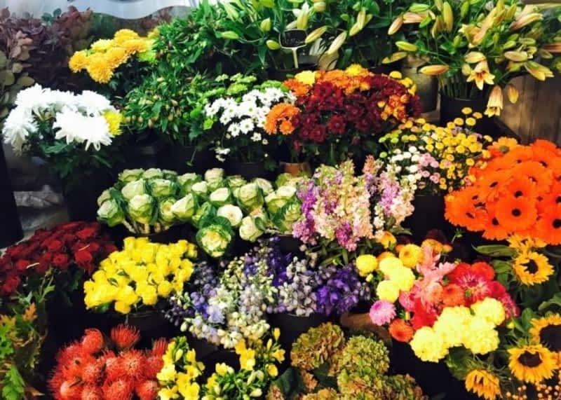 photo Oasis Flowers