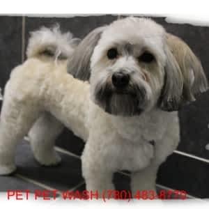 Pet Pet Wash Professional Dog Grooming Ltd - Opening Hours