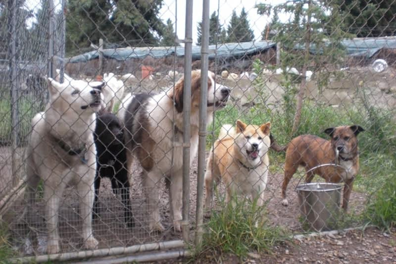 Calgary Dog Kennels Nw
