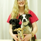 Northside Veterinary Clinic - Vétérinaires