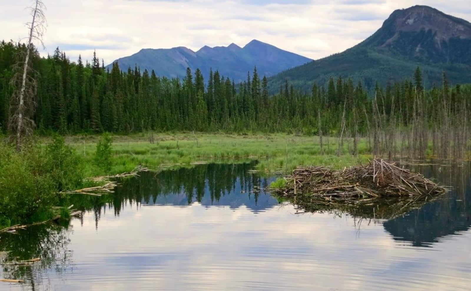 Toad River Lodge & RV Park - Opening Hours - Mile 422 Alaska