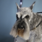Pride & Groom - Pet Grooming, Clipping & Washing - 204-221-8569