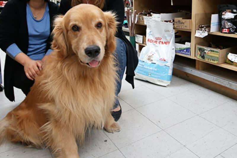 Natural Dog Food Burnaby Bc