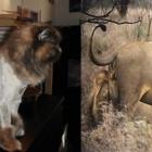 Toilettage Felinus Inc - Pet Grooming, Clipping & Washing - 514-931-3310