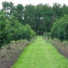 West Haven Nursery - Nurseries & Tree Growers