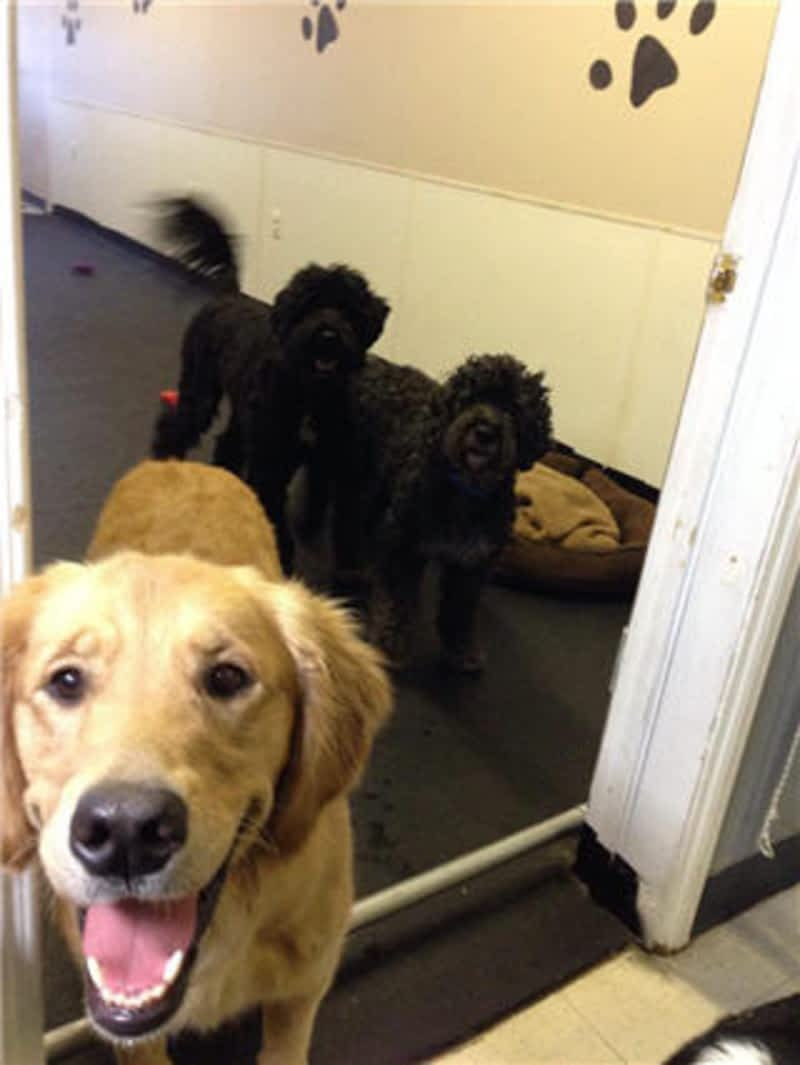 K9to5 dog daycare grooming calgary ab 4618a bowness for Dog boarding places near me