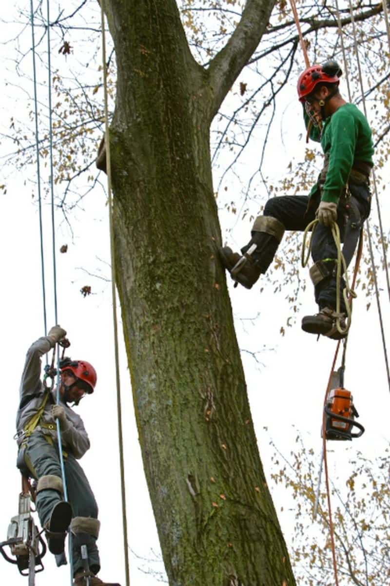 photo Rooted Tree Services