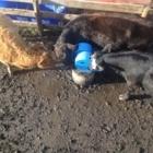 Frostfree Nosepumps Ltd - Livestock Equipment & Supplies - 1-866-843-6744